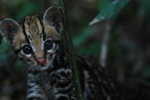 www.crowdrise.com/khan-rewilded